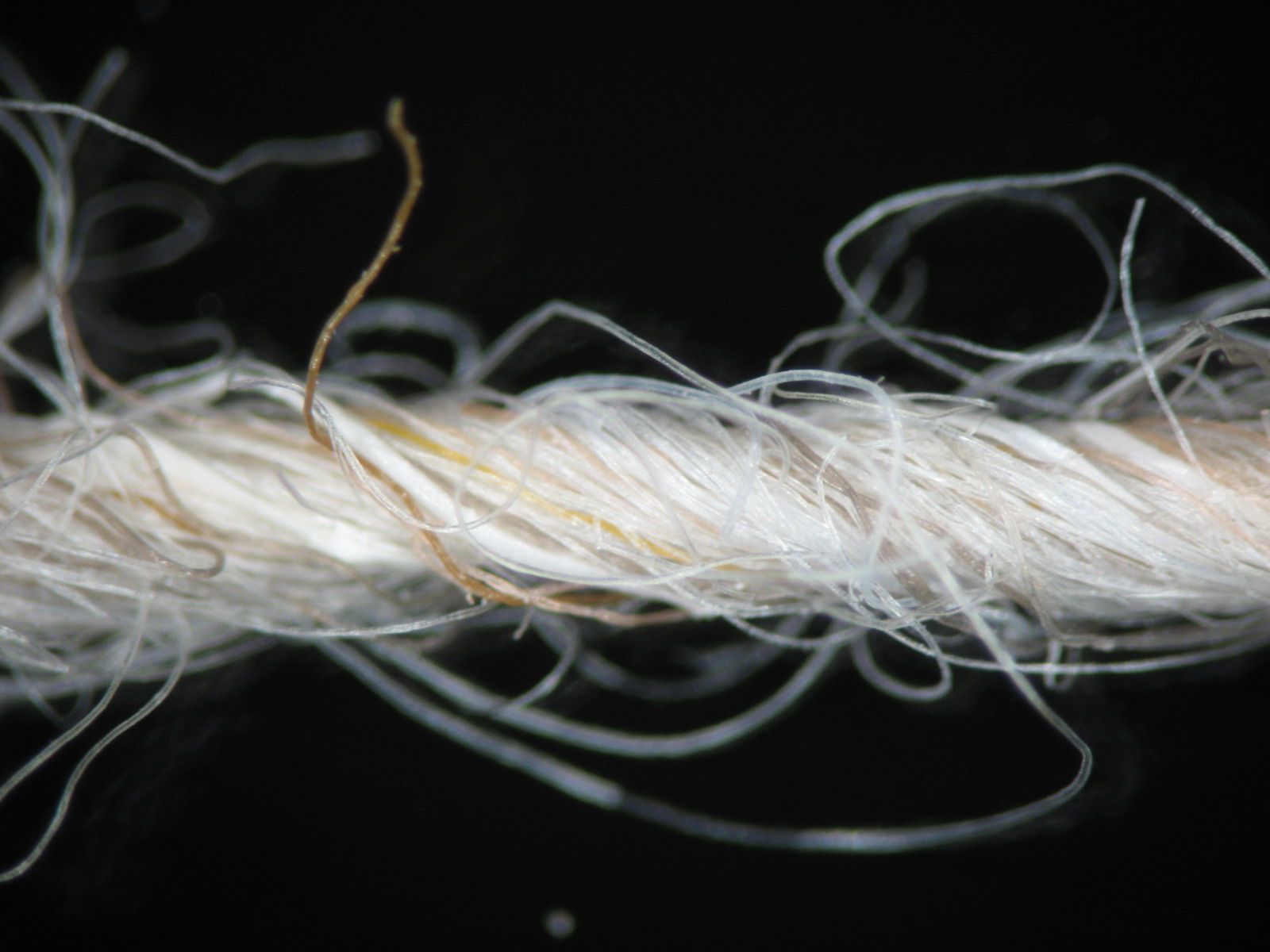 A magnified view of a section of yarn